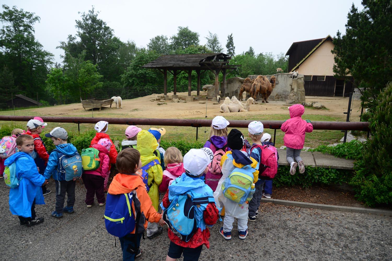 vylet zoo skolka (1)