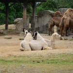 vylet zoo skolka (2)