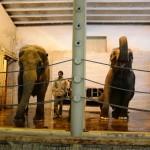 vylet zoo skolka (5)