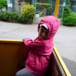 vylet zoo skolka (9)