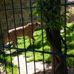 ZOO Chleby (68)