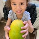 mango (2)